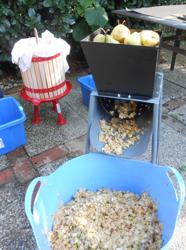 Cider készítése: az almát daráljuk le és préseljük ki.