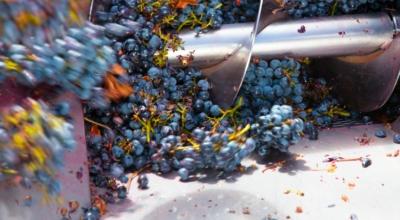 Gyümölcsdarálók - szőlődarálók